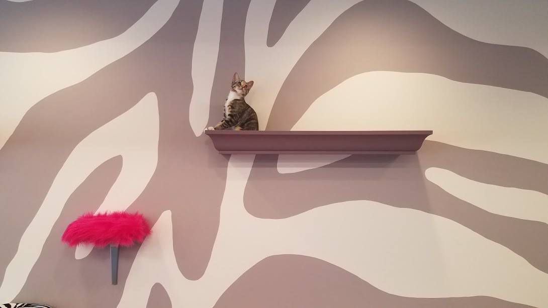 One of Purr Cat Cafe's first occupants