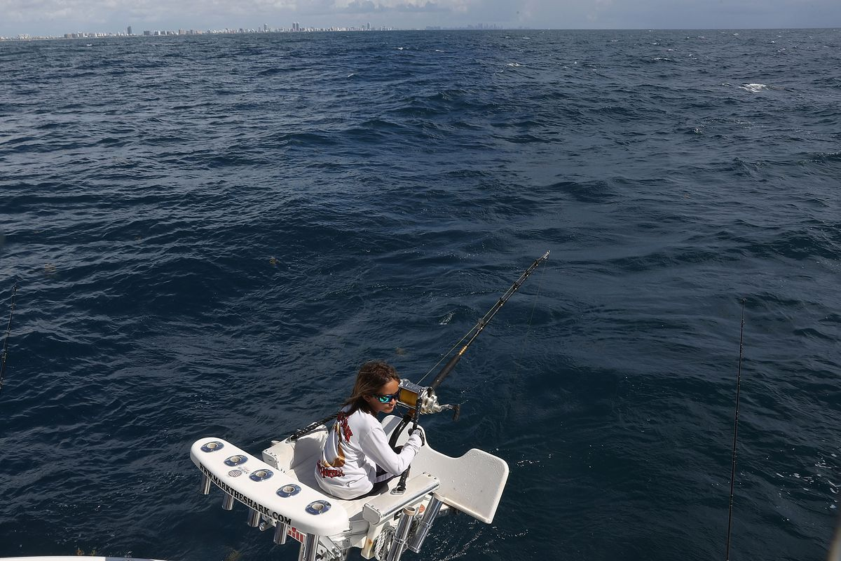 Florida Fisherman Cruises Miami Area Waters In Search Of Sharks
