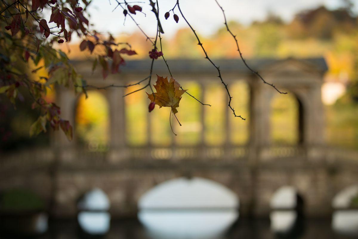 Autumn Colours Reach Their Peak In The UK