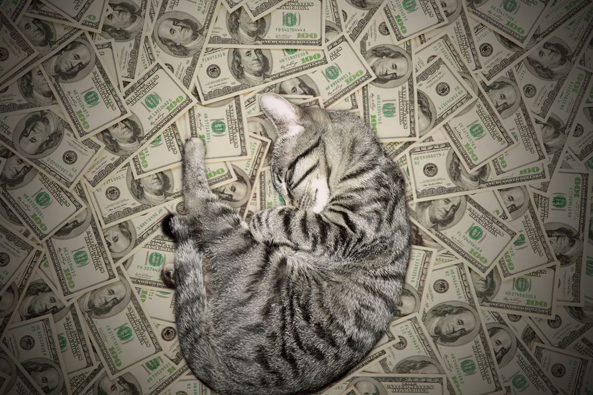 A cashcat from the popular Tumblr Cashcats.biz, which did not make the list because it features an assortment of cats