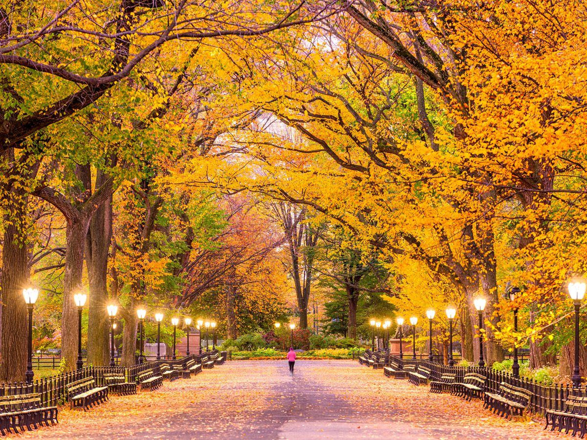 Fall Colors 2019 Where To See Fall Foliage In New York City