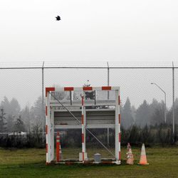 FILE- In this Friday, Jan. 16, 2009 file photo, a bird flies over a trap used to catch sparrows near a runway at the Seattle-Tacoma International Airport, during a demonstration of bird-deterrents used at the airport for journalists in Seattle. Although there is evidence that bird-control efforts near airports are paying off, U.S. Sen. Kirsten Gillibrand, D-NY, introduced legislation on Wednesday, April 25, 2012 that would make it easier to round up geese near JFK Airport and kill them, after a second airliner was forced from the skies over New York due to a bird strike.