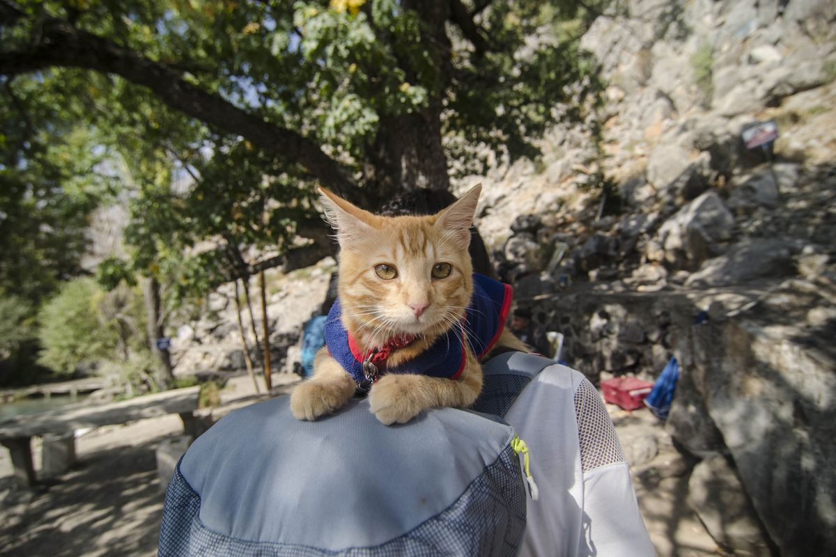 Travel around Turkey with a cat by thumbing
