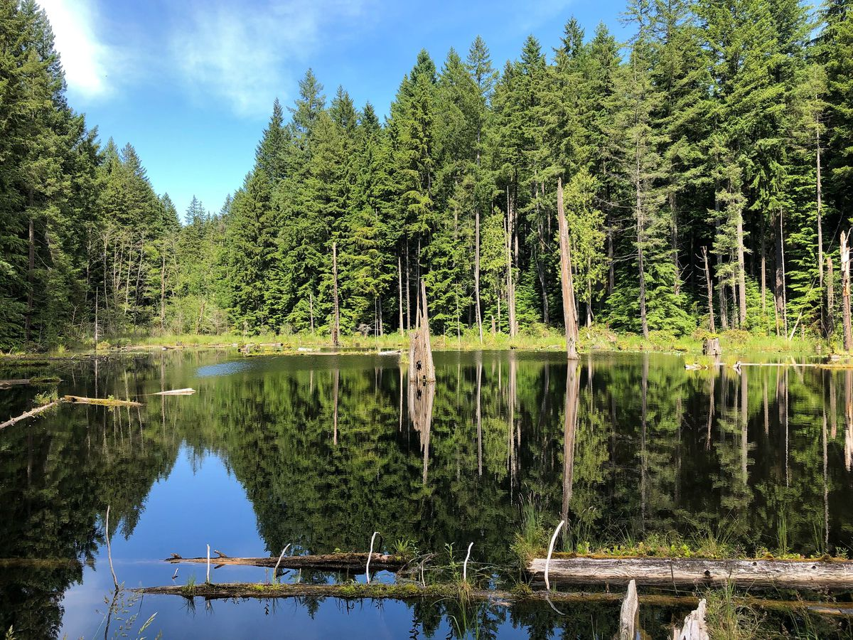 A calm lake surrounded by evergreen trees that reflect in the water. Two logs are floating in the lake, and the sky is mostly clear and blue with a couple of light clouds.