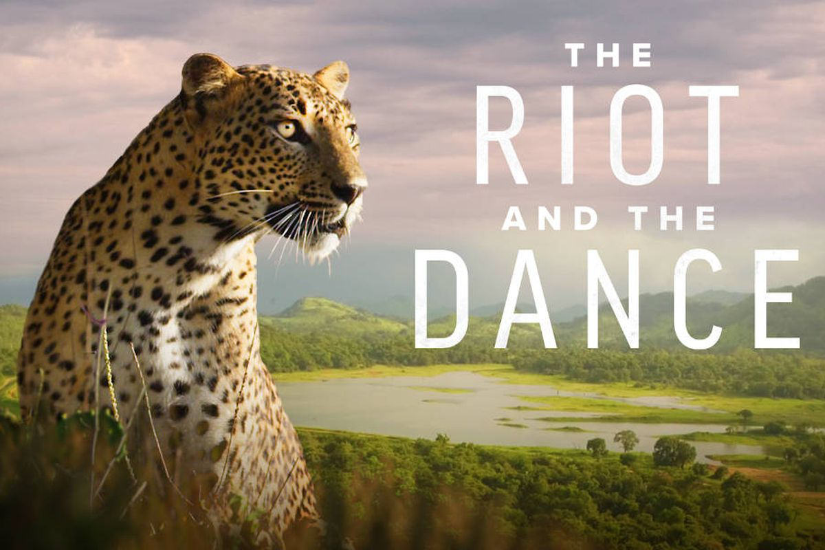 Photo of the 'The Riot and The Dance' campaign.