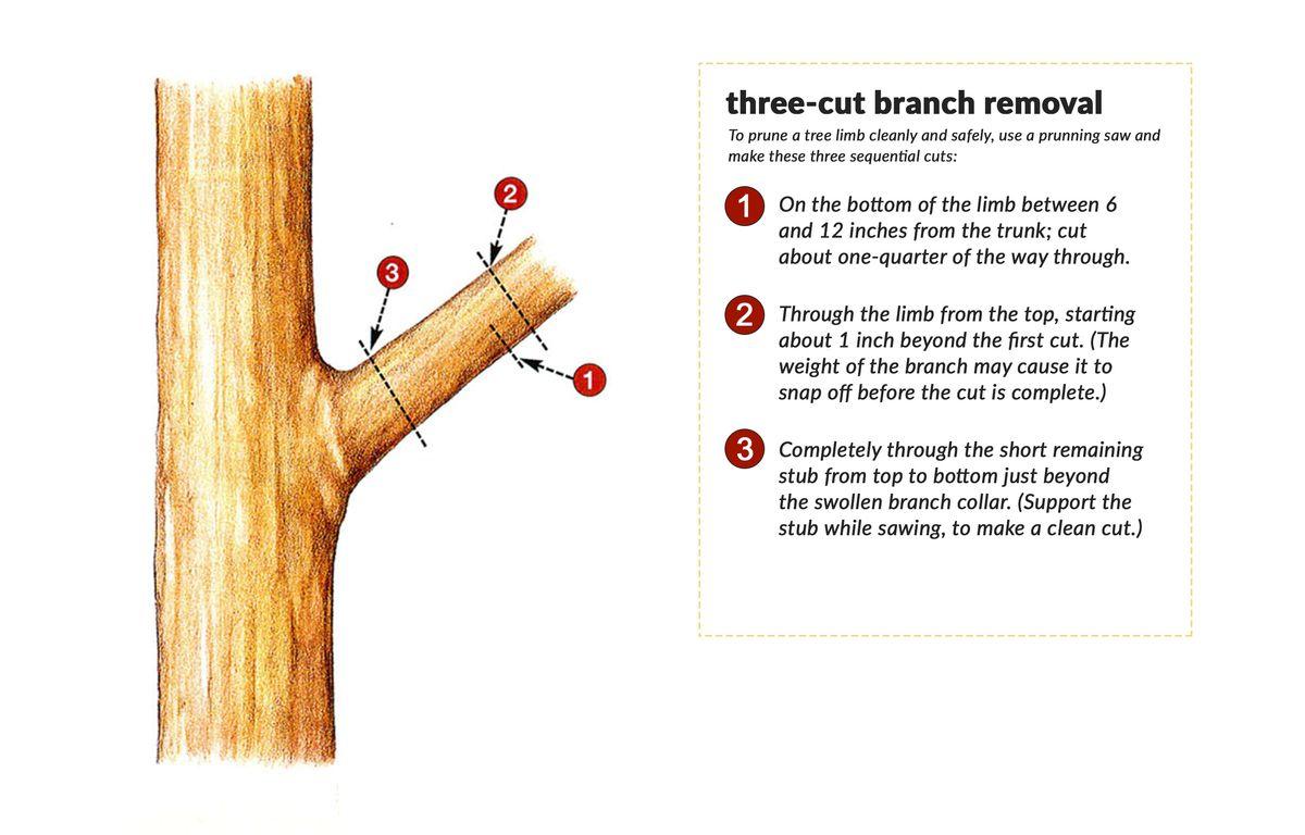 Three-cut Branch Removal Of A Tree Limb