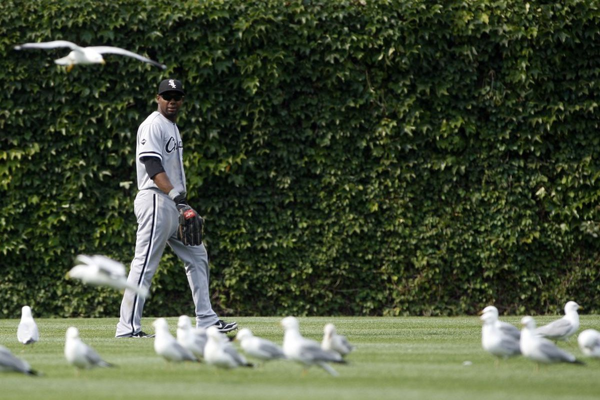 No one in this photo paid to get into Wrigley Field. Chicago, IL, USA; Chicago White Sox center fielder Alejandro De Aza watches as a flock of seagulls land in the outfield at Wrigley Field. Credit: Jerry Lai-US PRESSWIRE