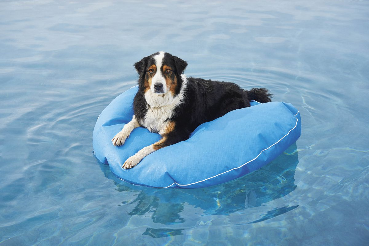 A nonporous, puncture-resistant floating dog bed at Frontgate comes in a bunch of colors and three sizes.
