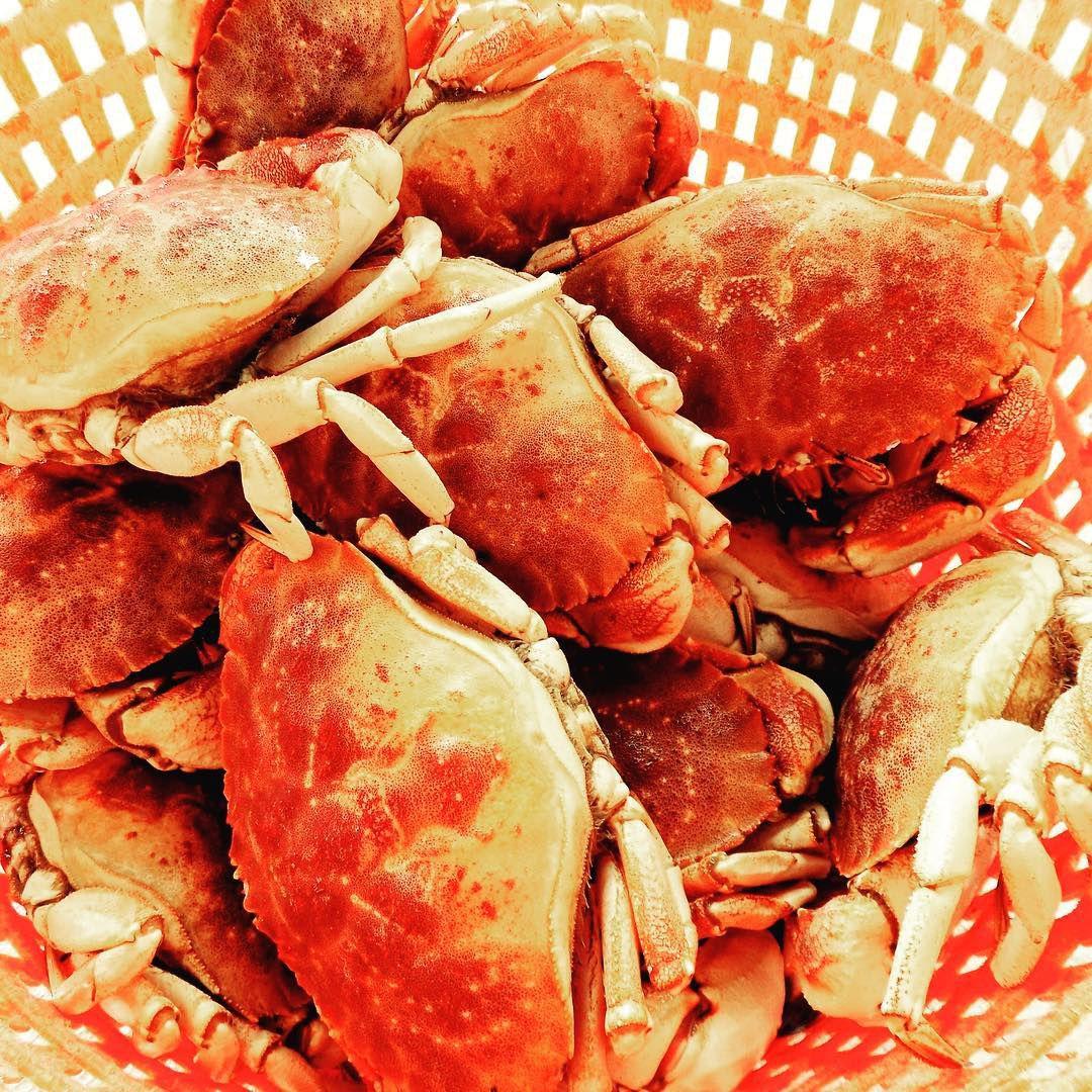 Fishermen's View jonah crab