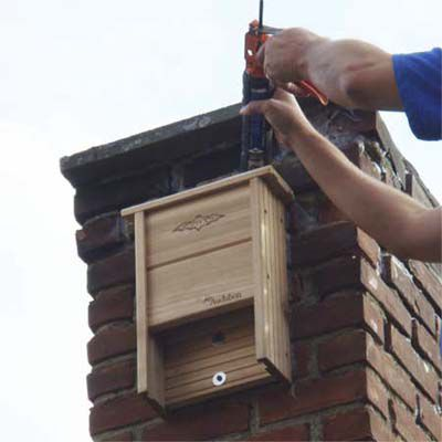 Bat Removal Steps From The Pros This Old House
