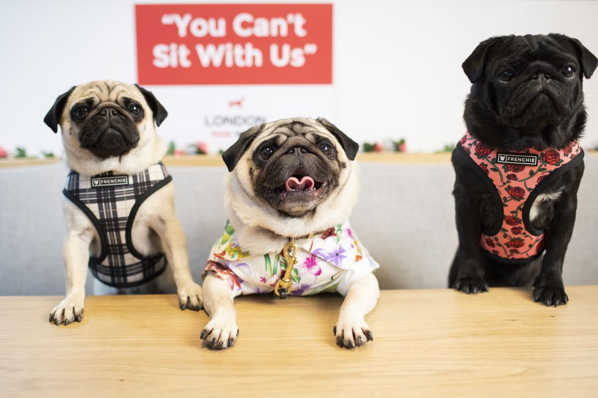 London Dog Week 2019 Closing Party