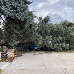 A vehicle is covered by a tree after strong winds blew trees over near500 South and 1000 East in Bountiful on Tuesday, Sept. 8, 2020.