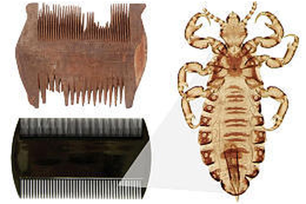 A sixth-century nit comb from Egypt, upper left, and its modern plastic counterpart are next to image of modern louse.