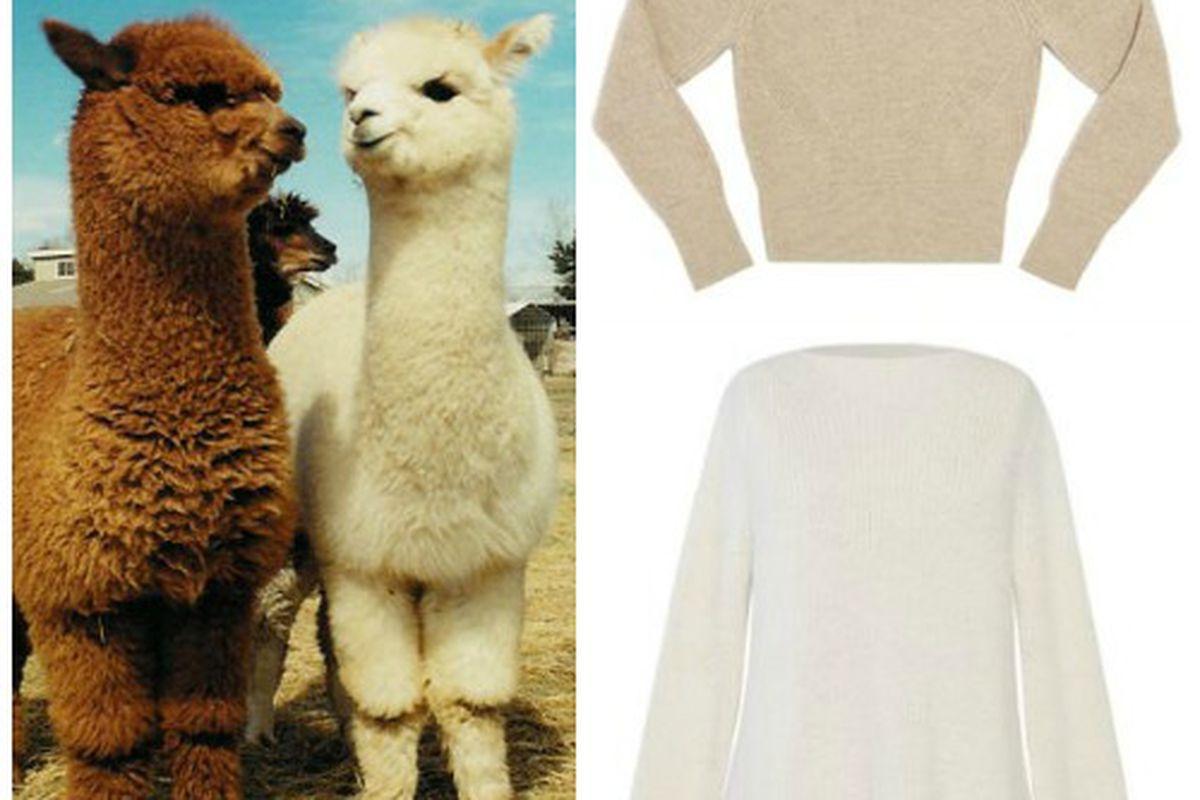"Alpaca image via <a href=""http://www.minibury.com/event/alpaca-open-barn/"">Minibury</a>"