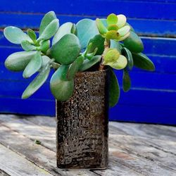 """<b>Succulents and artsy vases</b>: <b>Sprout Home</b> <a href=""""https://www.sprouthome.com/shop/vases-2/bronze-weave-vase/"""">Bronze Weave Vase</a>, $12"""