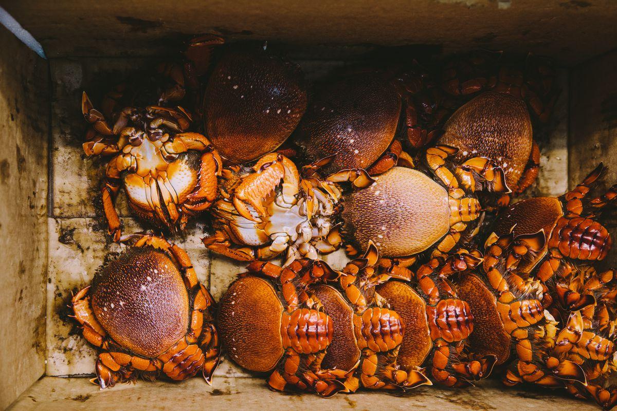 A cardboard box of fresh spanner crabs
