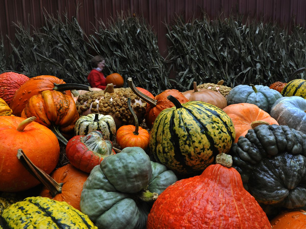 Scenes From the Pumpkin Orchard