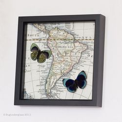 """<a href=""""http://www.etsy.com/listing/82170040/framed-butterfly-charles-darwin-map""""> Bug Under Glass framed butterfly and map</a>, $60 etsy.com"""
