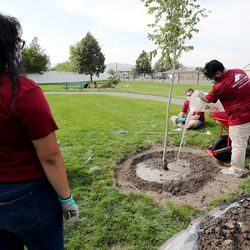 Mountain America employees Violet Baeza, left, Edgar Aguirre and Dillan Hancey join other volunteers at a Tree Utah community planting event at Sommerset Park in Lehi on Wednesday, Sept. 23, 2020.