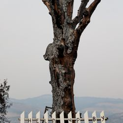 """A fence reading """"held up by love"""" rests against a burned tree on the side of the road in Talent, Ore., on Tuesday, Sept. 22, 2020."""