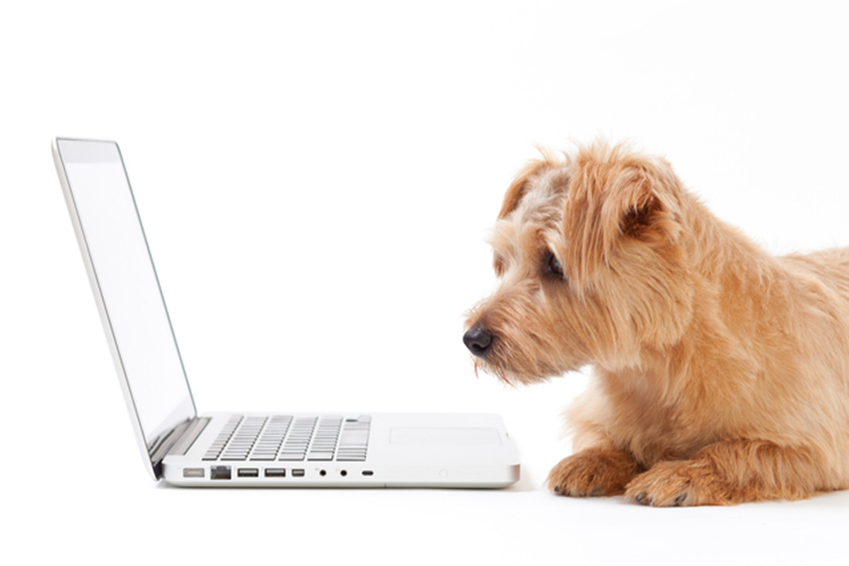 Pets internet shutterstock