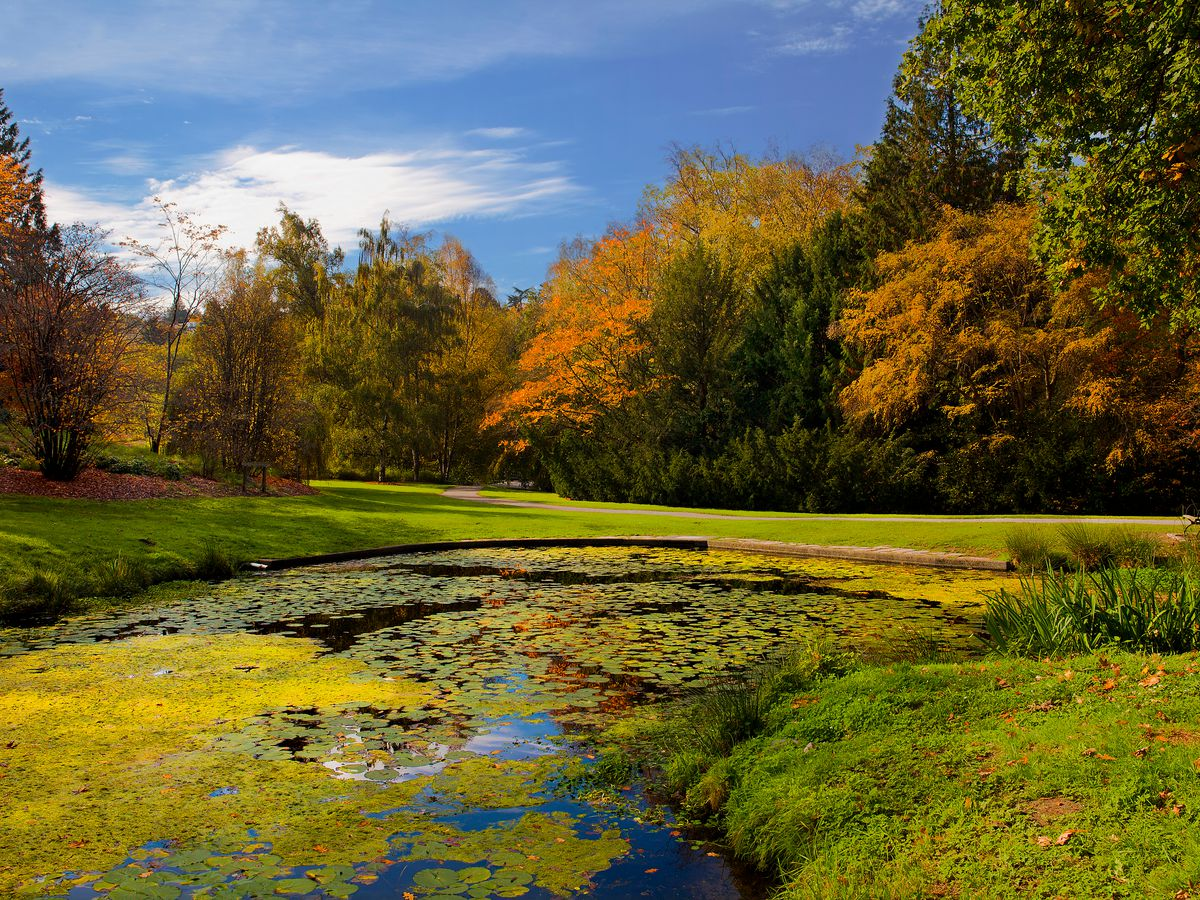 A still pond surrounded by a grassy lawn. The whole area is surrounded by trees, some with leaves still green, some changing into autumn colors.