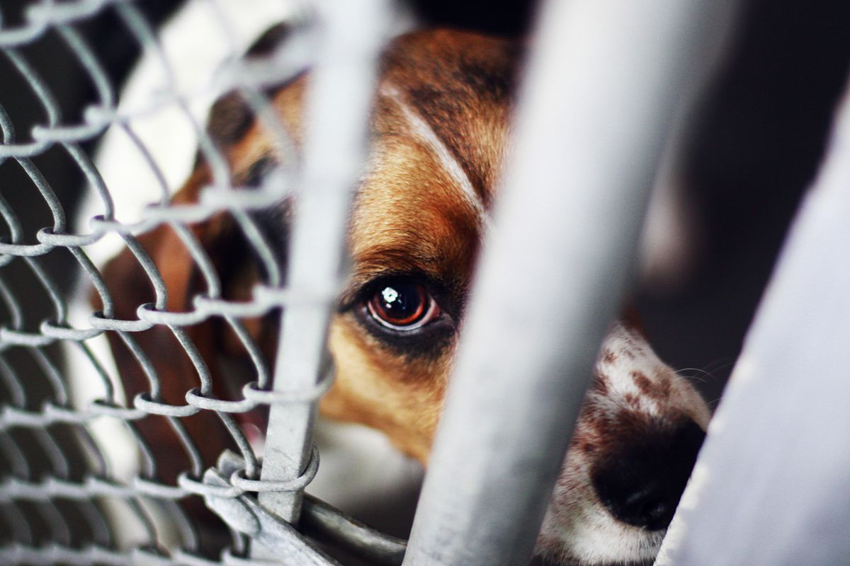 A dog looking through a fence.