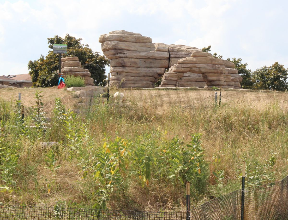 Palmisano Park is home to boulders for visitors to climb.