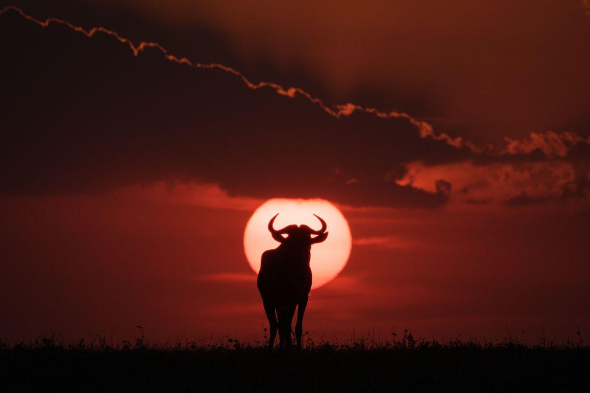 TOPSHOT-KENYA-NATURE-WILDLIFE-ANIMAL
