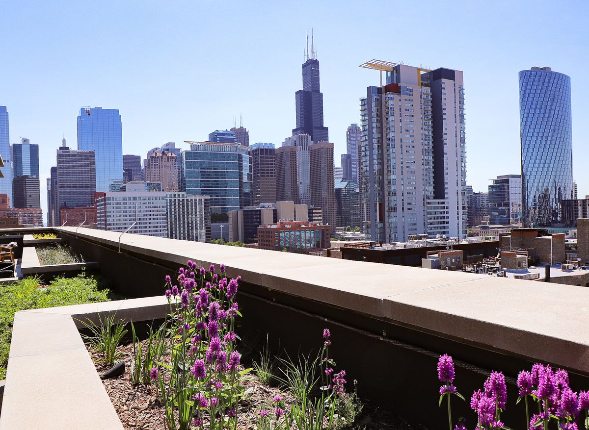 A view of Chicago's Willis Tower from a West Loop roof.
