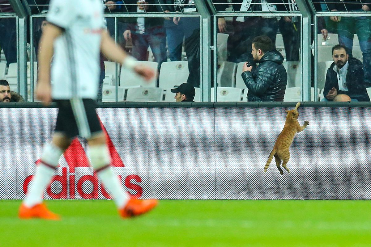 A cat runs and jumps on the field during the UEFA Champions League Round 16 return match between Besiktas and FC Bayern Munich at Vodafone Park in Istanbul, Turkey on March 14, 2018. Match is interrupted for a while by a cat.