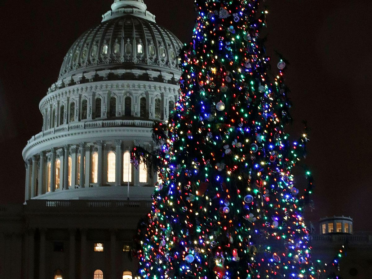 Christmas In Dc.Every Christmas Tree Worth Visiting In The D C Area Curbed Dc