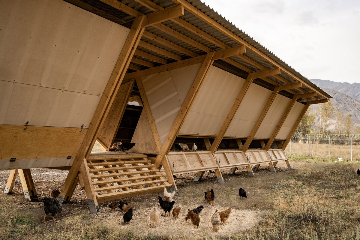 Modern Chicken Coop Designed For Maximum Chicken Comfort Curbed
