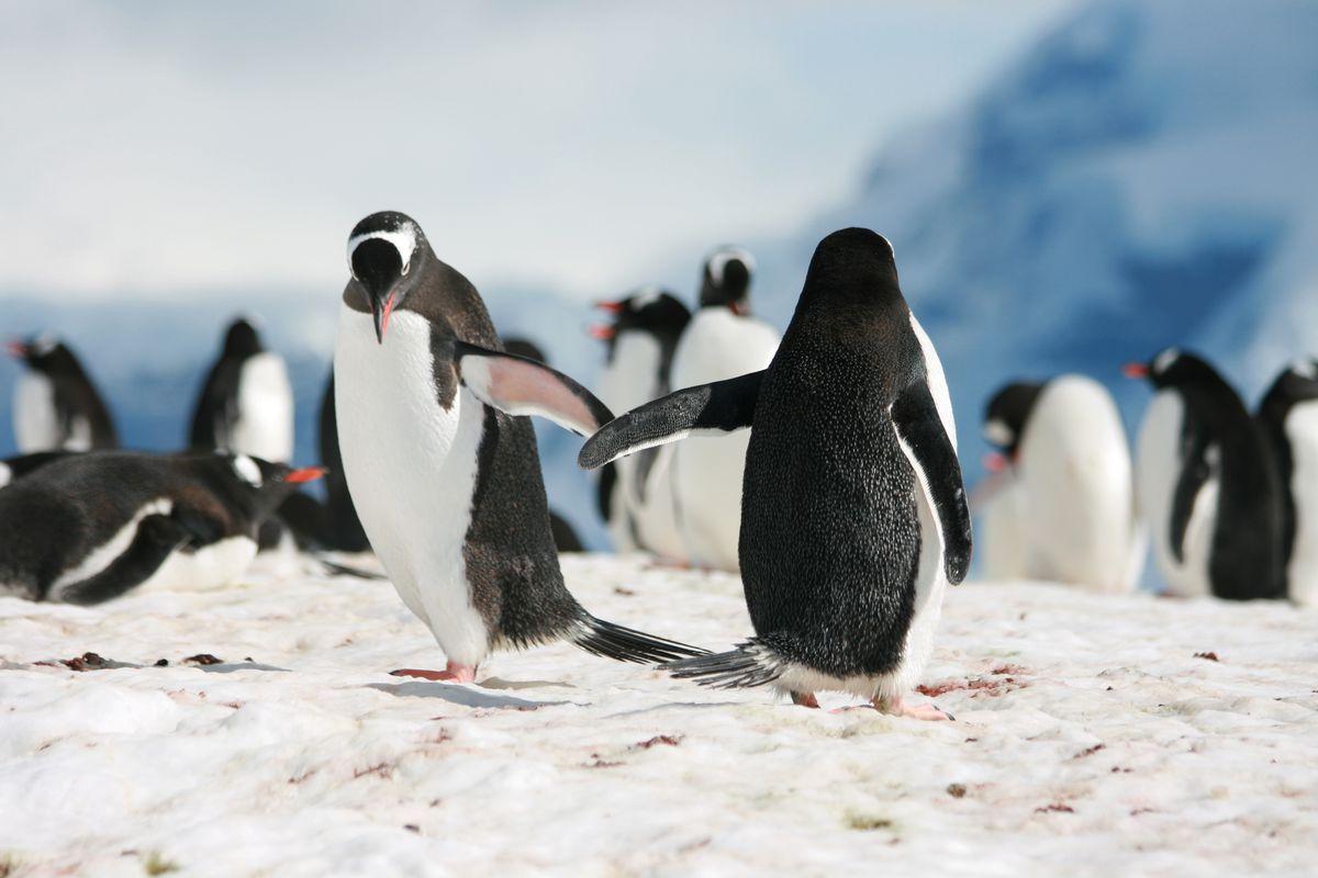 penguin high five (shutterstock / Anton_Ivanov)