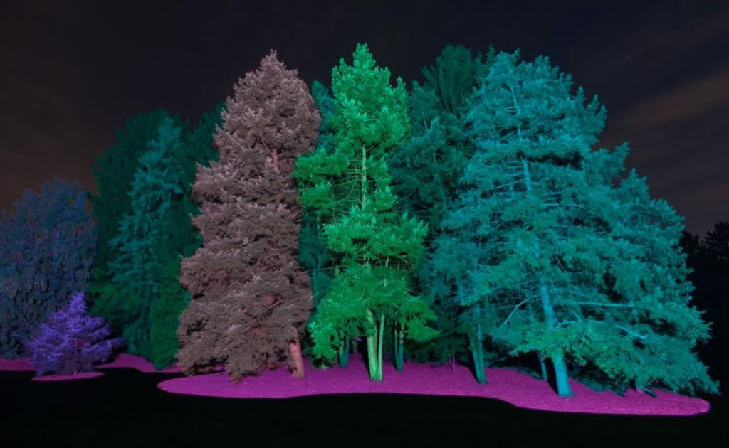 """The Morton Arboretum's """"Illumination"""" invites visitors to see trees in a different light on a one-mile walk surrounded by 50 acres of the Arboretum's trees, brought to life with LED lights, interactive elements and sound. 