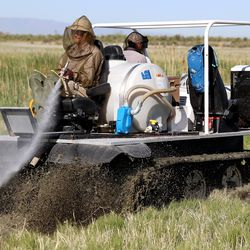 Salt Lake Mosquito Abatement District's Sam Nelson moves a spray nozzle back and forth as he and co-worker Seth Summerhays use a track machine to spray VectoBac 12AS, a biological larvicide, to kill mosquito larvae in the wetlands north and west of Salt Lake City on Friday, May 28, 2021.