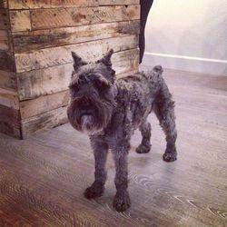Meet One Down Dog's mascot, Patrick the Dog!