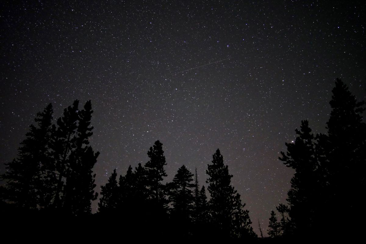 A starry sky lined at the bottom by silhouettes of evergreen trees.