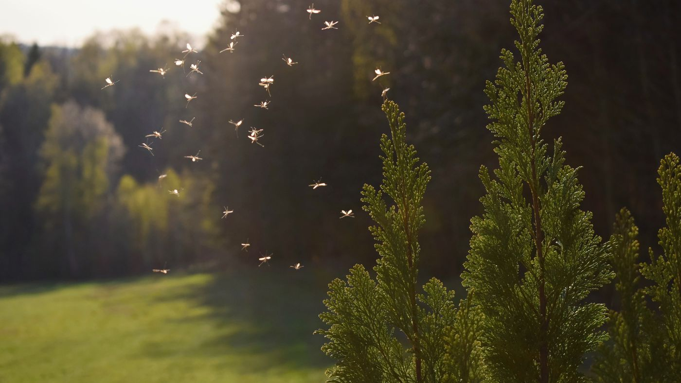 The Best Ways To Get Rid Of Mosquitoes This Old House