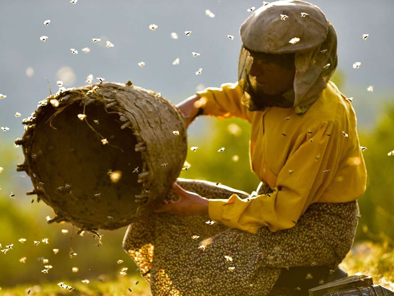 A scene from Ljubomir Stefanov and Tamara Kotevska's documentary Honeyland.