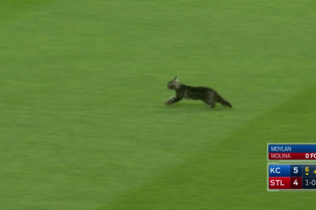 Cat crashes Cardinals, Royals MLB game