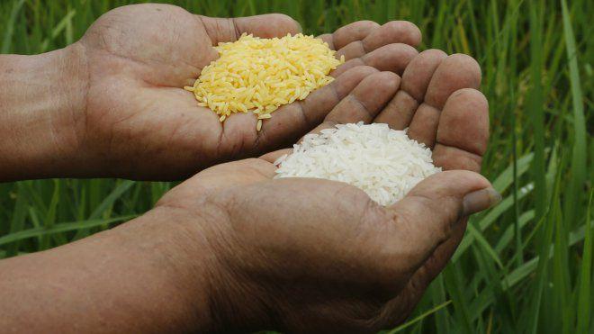 Rice, rice baby