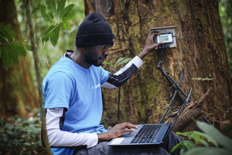 Kafuti performs some dendrochronology, measuring the minute-by-minute growth of the trees. However, there have been some challenges with the machines not working sometimes.