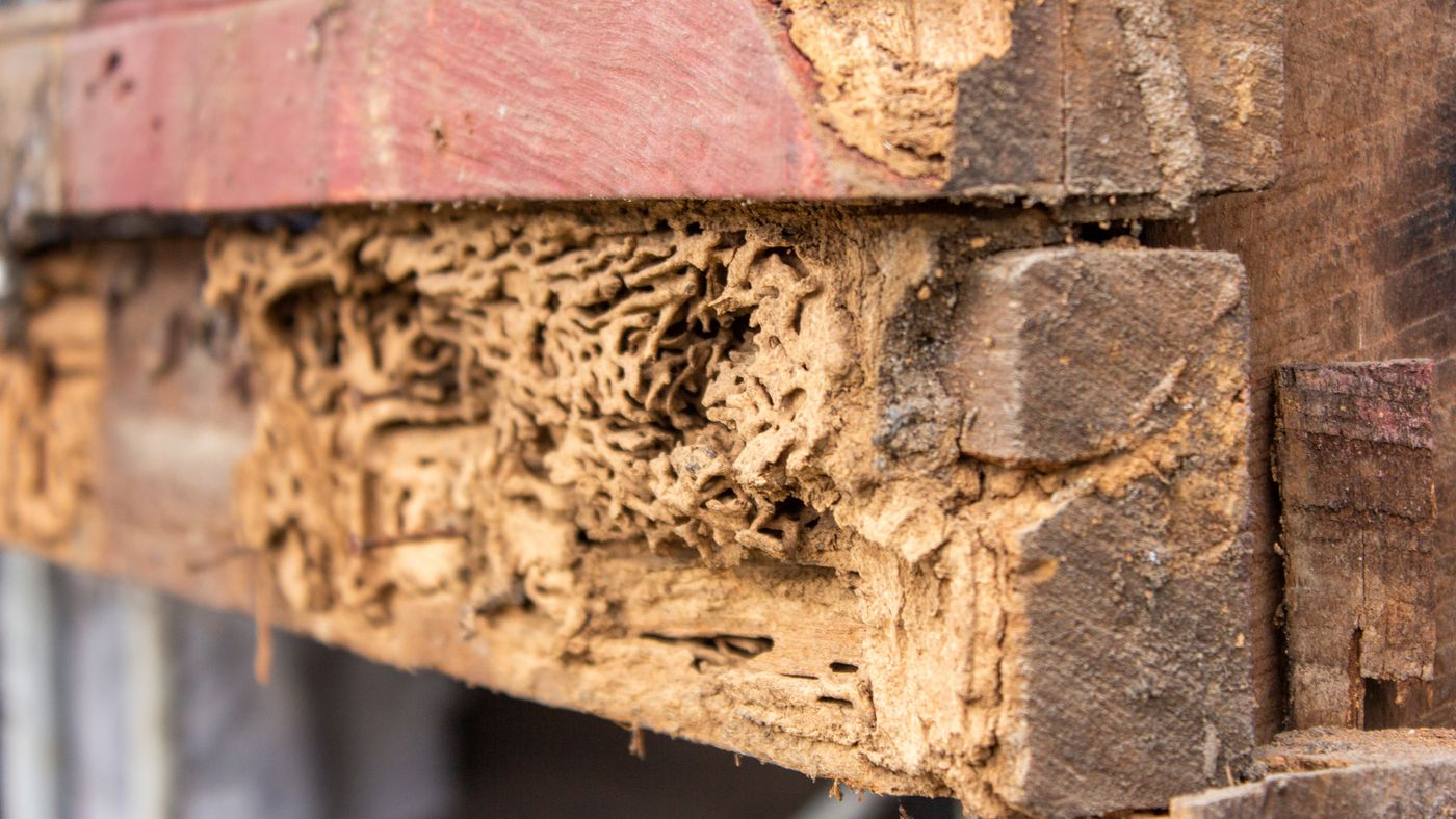 The Top 5 Termite Killers Of 2020 This Old House