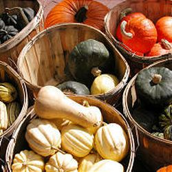 Once squash is harvested, cure by placing it in a warm, dry place out of direct sunlight for two weeks.
