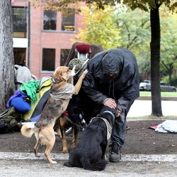 Emil Miller pets his dogs in Salt Lake City's Pioneer Park in Utah on Thursday, Oct. 10, 2013. Miller became homeless when the recession hit and he lost his job.