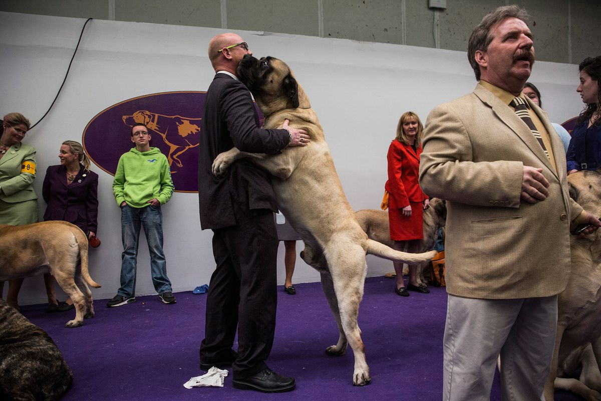 Reviewing the terrifying dogs in Westminster's 'Working