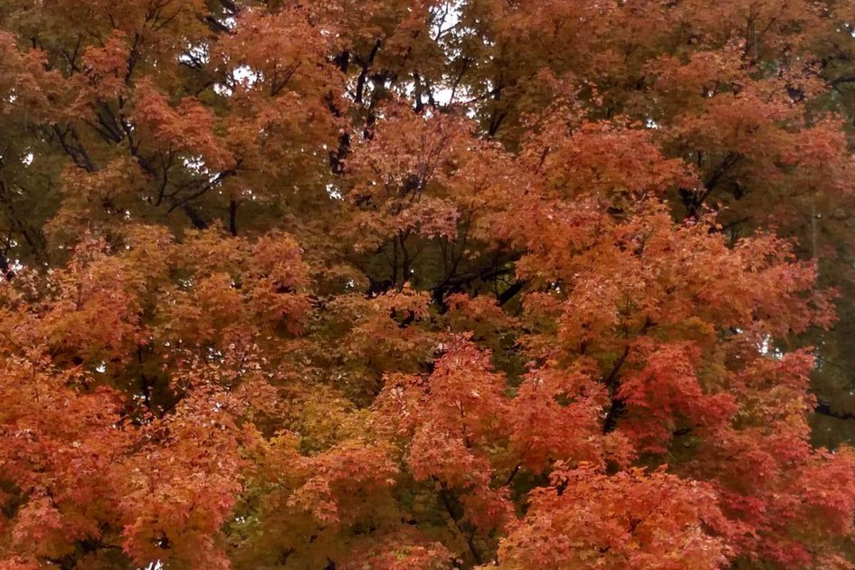 Autumn Colors In Vilas Park Lagoon >> Fall Colors Outdoors Report A Howe To Primer Chicago Sun Times