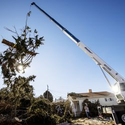 Hang M High Crane Service crews remove a portion of one of two a large pine tree that were felled by high winds in Lyle Bair's yard in Washington Terrace on Tuesday, Jan. 19, 2021.One of the trees landed on Bair's home, damaging his carport, his car and other items.