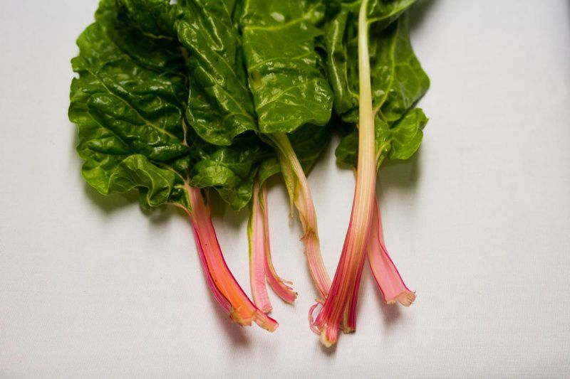 Pink stems lead to large, thick green chard leaves